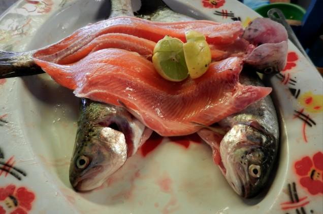 Ryba zwana truchą