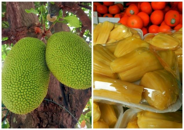 Jack Fruit to największe owoce na świecie